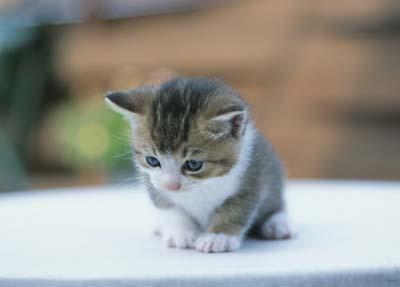 [ 测试题]   小动物协会发行了四张猫咪明信片,每一张都以可爱的小