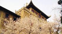武汉大学美景