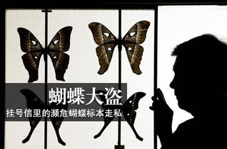走私犯用挂号信寄26枚濒危蝴蝶标本被捕