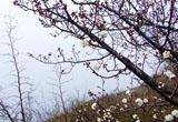 早春二月 黍谷先春