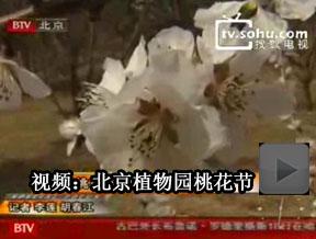 大地回春 北京桃花节周末亮相植物园